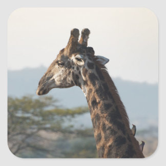 Hitching a ride on a giraffe square sticker