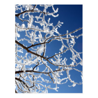 Hoarfrost branches postcard