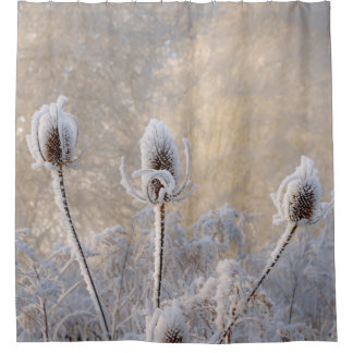 Hoarfrost Teasels Winter Photo Scenic Nature - Tub