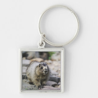 Hoary Marmot, Marmota caligata, young with Silver-Colored Square Keychain