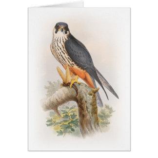 Hobby Falcon John Gould Birds of Great Britain Card