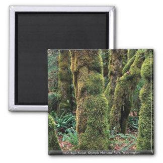 Hoh Rain Forest, Olympic National Park, Washington Square Magnet