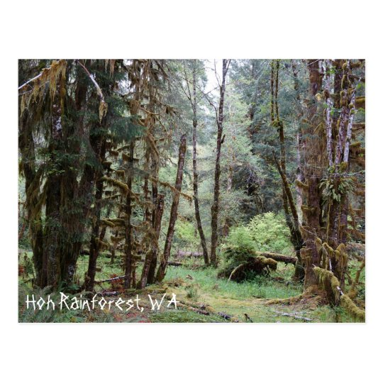 Hoh Rainforest, Washington State, Postcard