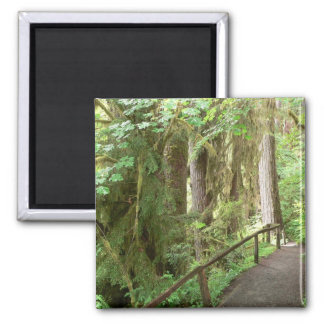 Hoh Valley Rain Forest Magnet