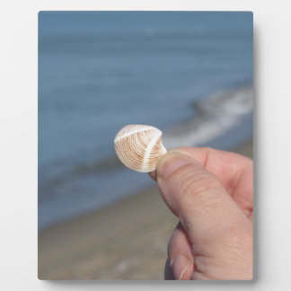 Holding a seashell in the hand plaque