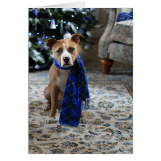 Holiday Cheer from Pit Bull Rescue Dog Card
