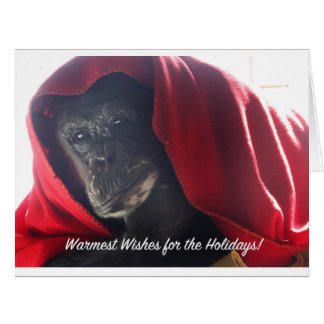Holiday greeting card - rescued chimpanzee image