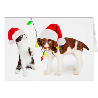 Holiday Pet Mischief Card