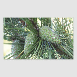 Holiday Pine Cones Sticker