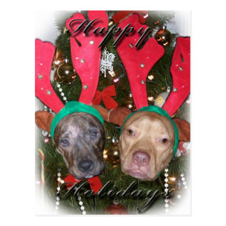 Holiday Pitbull Reindeers Postcard