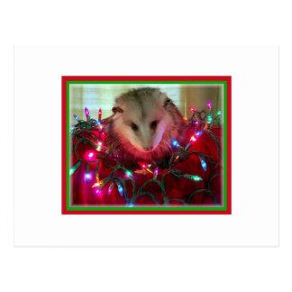 holiday possum postcard