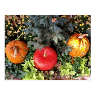 Holiday Pumpkins Postcard