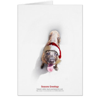 Holiday Shelter Dog 2 Card