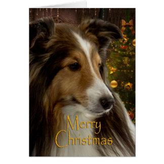 Holiday Sheltie Xmas Card