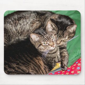 Holidays - Christmas - Everyday - Two Cats Mouse Pad