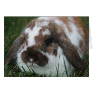 Holland Lop Bunny by T Schwandt Photography Card