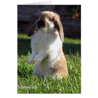 Holland Lop Standing up Card