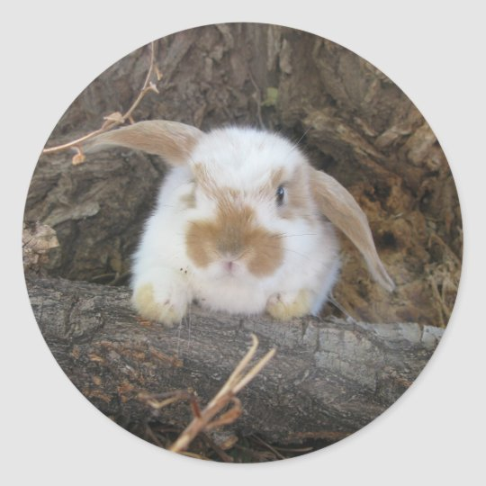 Holland Lop Sticker