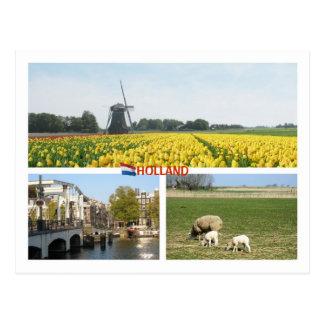 Holland Windmill Tulips Amsterdam Dutch Landscape Postcard