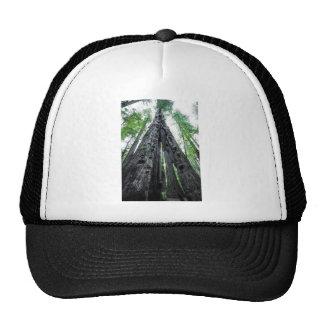 Hollow Redwood Trucker Hat