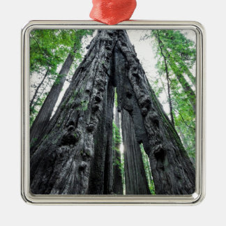 Hollow Redwood Silver-Colored Square Ornament