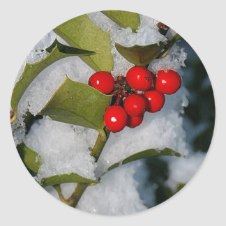 Holly berries in snow stickers