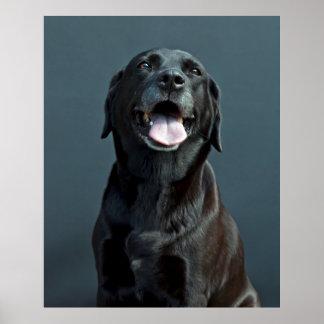 Holly the black Labrador Poster