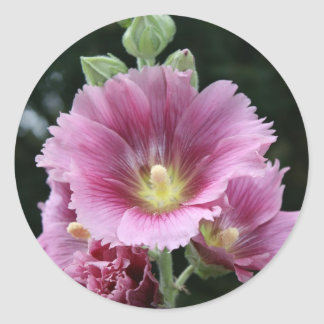 Hollyhock Classic Round Sticker