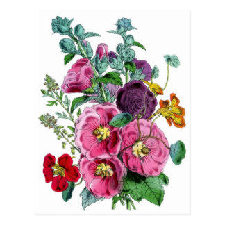 Hollyhocks Botanical Illustration Postcard