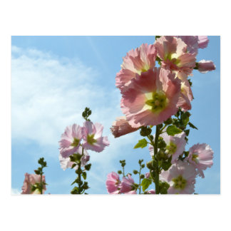 Hollyhocks: Japan Postcard