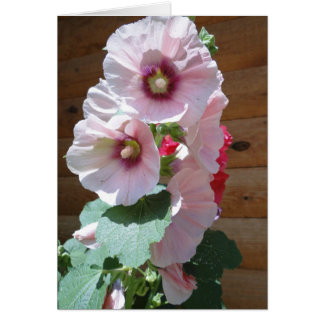 Hollyhocks of Pink, Thinking of You Card