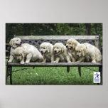 Holly's Half Dozen bench poster