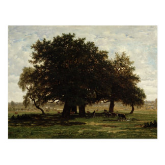 Holm Oaks, Apremont, 1850-52 Postcard