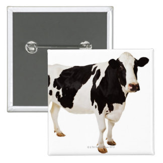 Holstein cow (Bos taurus) 2 Inch Square Button