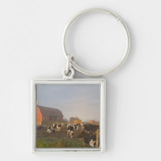 Holstein dairy cows outside a barn at sunrise Silver-Colored square keychain