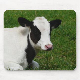 Holstein Dairy Milk Cow on Grass Mouse Pad