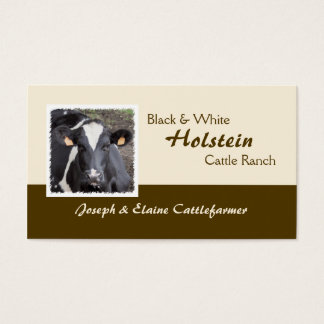 Holstein dairy or beef cattle photo business card