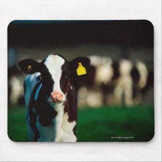 Holstein-Friesian calf Mouse Pad