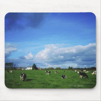Holstein-Friesian Cattle near Thurles, Co Mouse Pad
