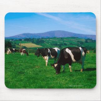 Holstein-Friesian cows near Borris, County Mouse Pad