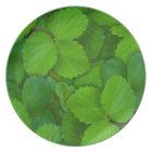 Holy Basil Tulsi Green Mint Leaves Plate