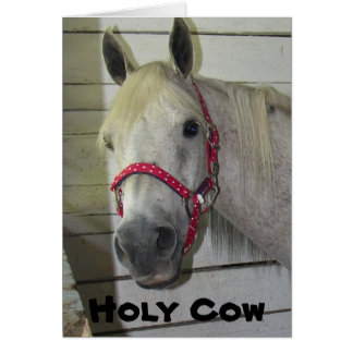 ****HOLY COW SAYS YOUNG FILLY*** HAPPY BIRTHDAY CARD