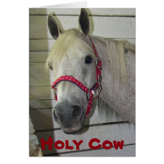 HOLY COW YOUNG FILLY **HAPPY BIRTHDAY** CARD