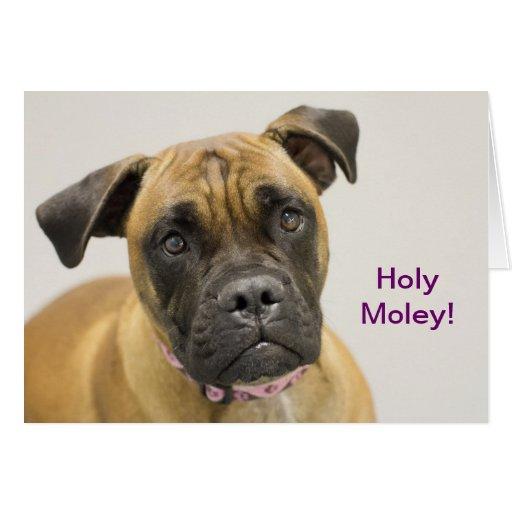 Holy Moley Boxer Birthday Card