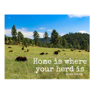 Home is Where Your Herd Is-South Dakota Post Card