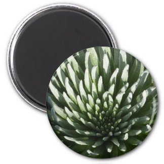 Home, office or classroom use... :) 2 inch round magnet