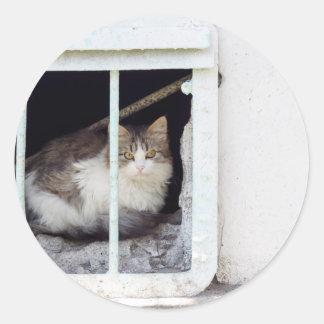 Homeless cat observes street classic round sticker
