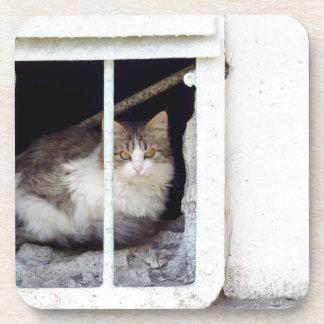 Homeless cat observes street coaster
