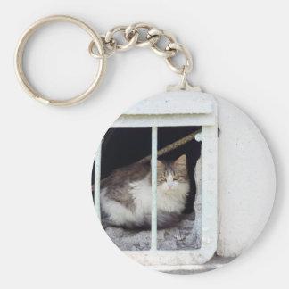 Homeless cat observes street keychain