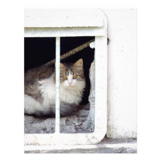 Homeless cat observes street letterhead